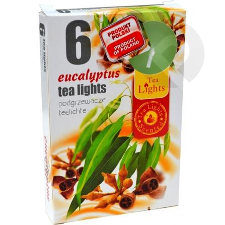 Podgrzewacze zapachowe Eucaliptus